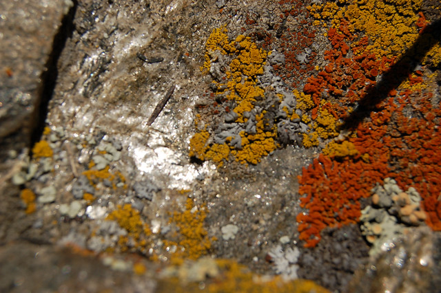 Even the Lichen is Celebrating Spring