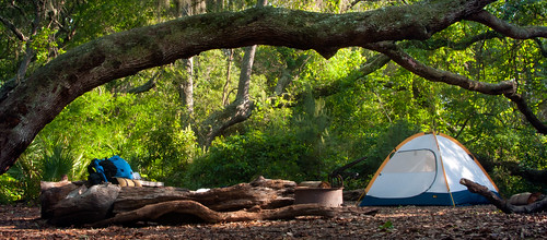camping tree ga tent cumberlandisland campsite stafford catsmeow tentsite firstpacktripwithtimsincecollege