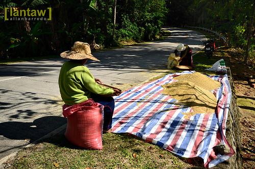 Farmers at roadside