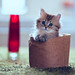 Basket Kitty by torode