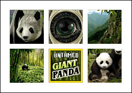 free Untamed Giant Panda slot game symbols