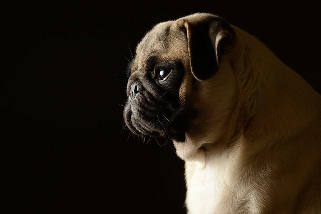 D800firstdog