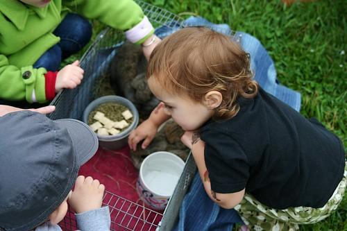 petting baby angoras