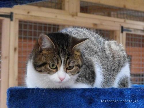 Fri, May 18th, 2012 Lost Female Cat - Tawanaghmore Paralell To Prison Road, Balla Area, Mayo