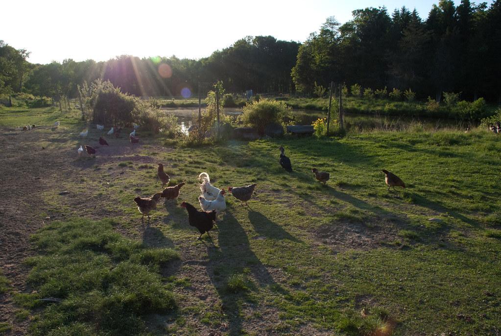 farm_14