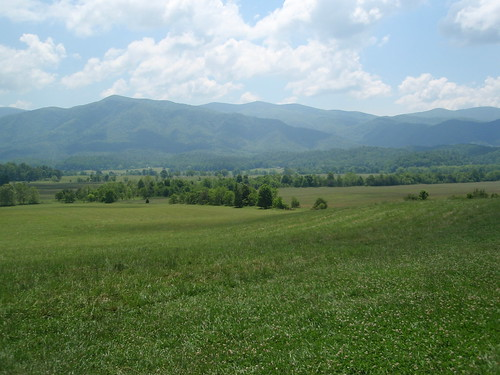 cade's cove meadows (4)