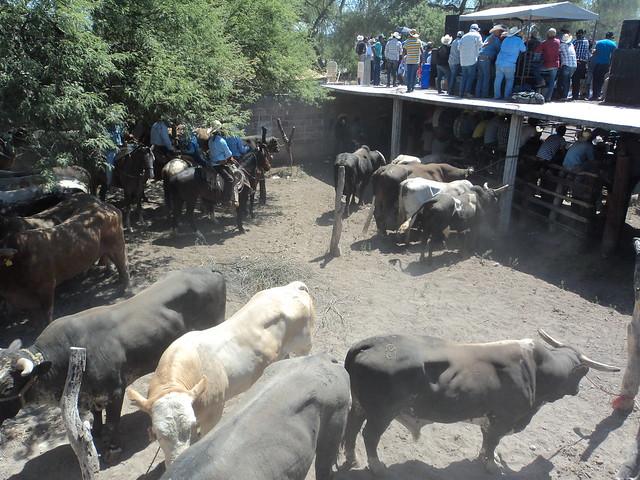 Jaripeo Pastora 2012