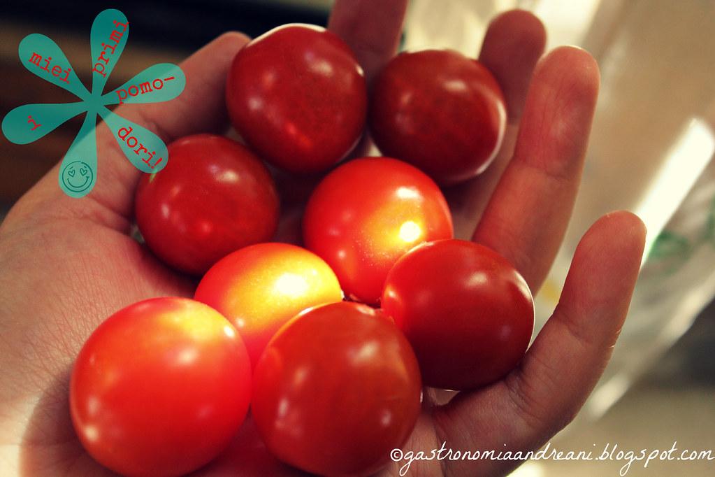 i miei primi pomodorini