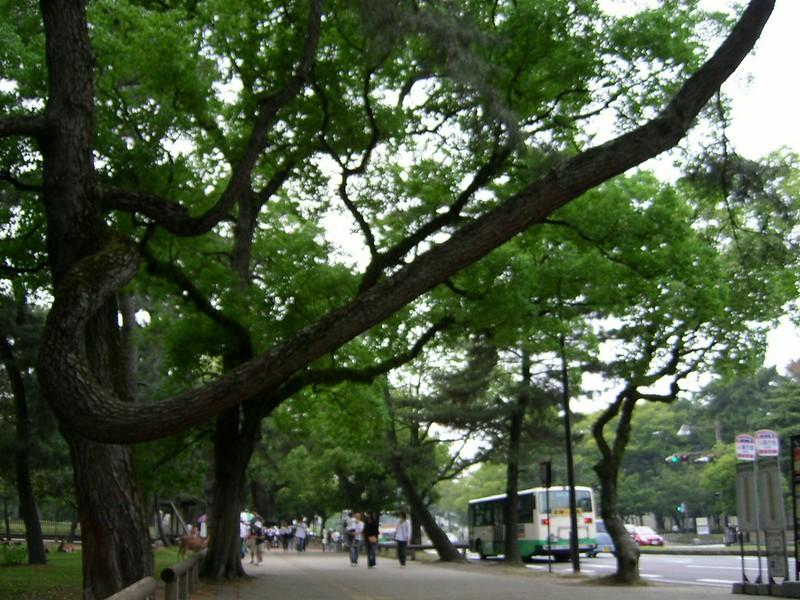 20050619_08_Nara_Tree