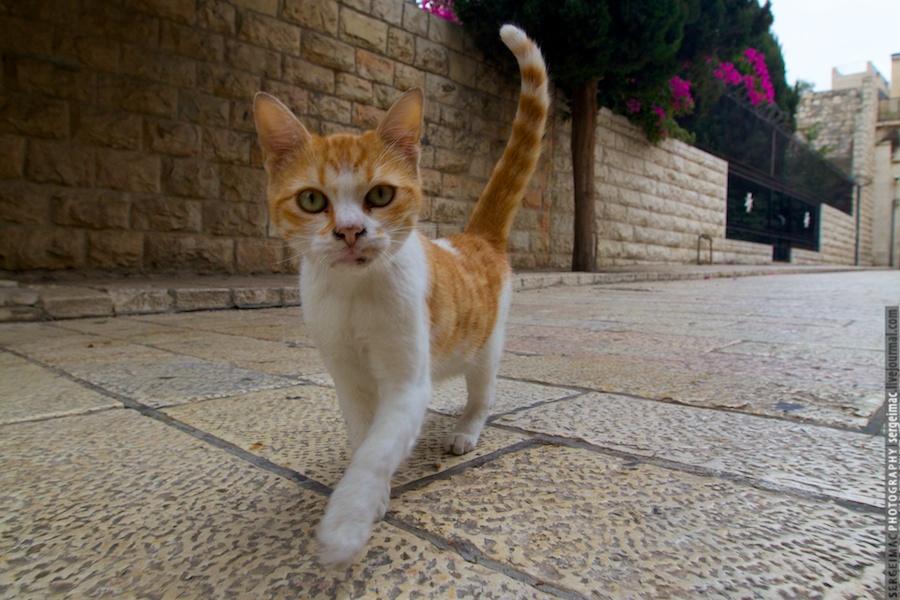 20111012_CAT_038