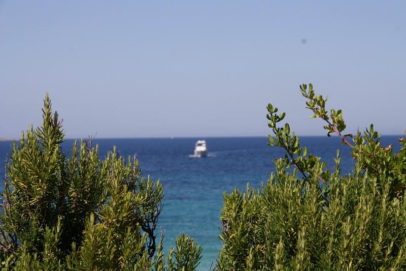 IMG_3735 розмарин и море - гориз