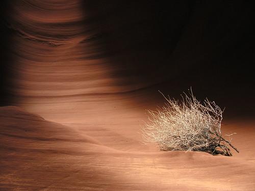 Still life in the Desert (USA - AZ, Secret Canyon)