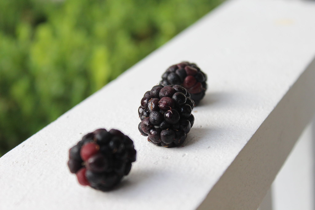 blackberries on the porch.