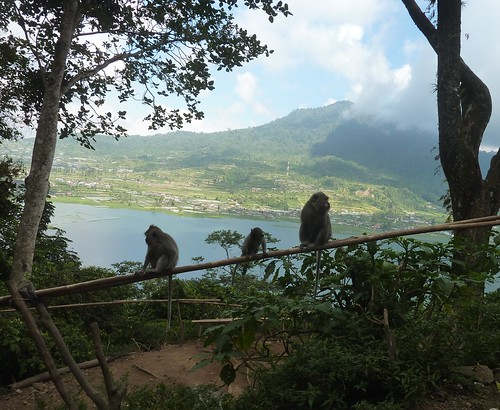 Bali-Route Jatiluwih-Bedugul-Munduk (27)