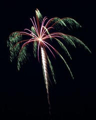 Palm Tree Firework
