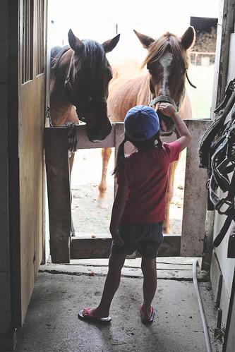 picton, horse riding