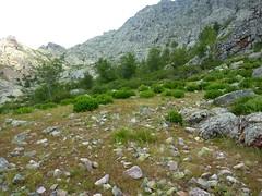 Végétation autour des bergeries de Scaffone