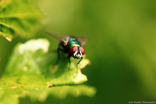 There was a fly on a leaf by Dirk Mueller Photography
