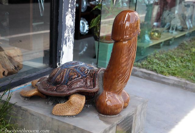 Turtle.  Penis.
