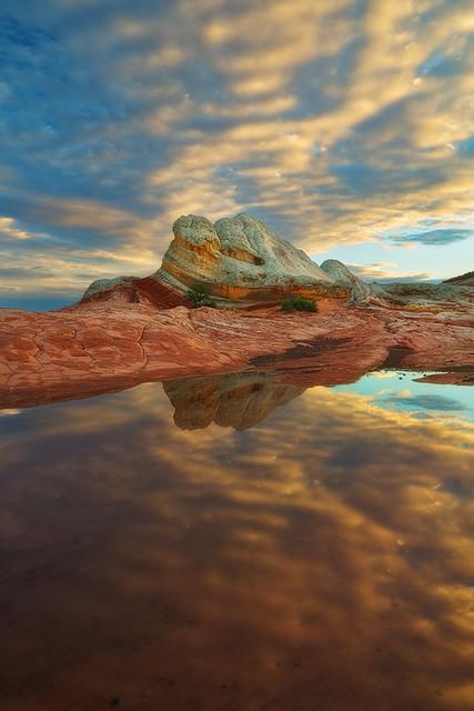 Reflected - White Pocket, Vermillion Cliffs Wilderness