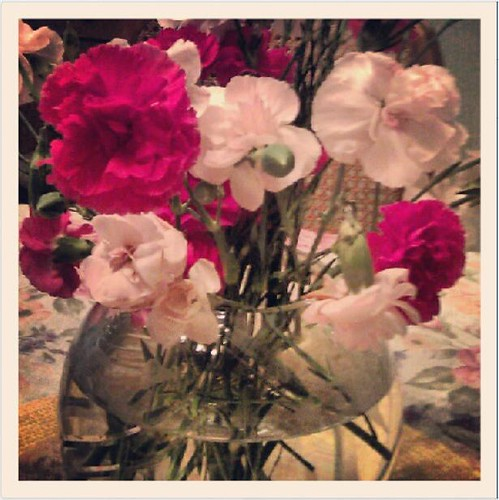 Carnations at Grandma's House