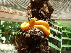 Serre aux reptiles - Costa Rica
