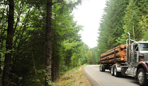 Logs loaded up in transport, truck, road, forest, logging country, Breightenbush, Oregon, USA by Wonderlane