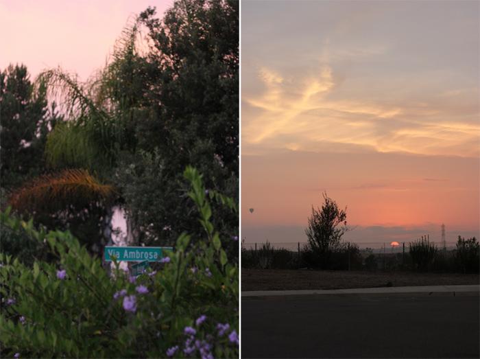 ambrosia sunsets