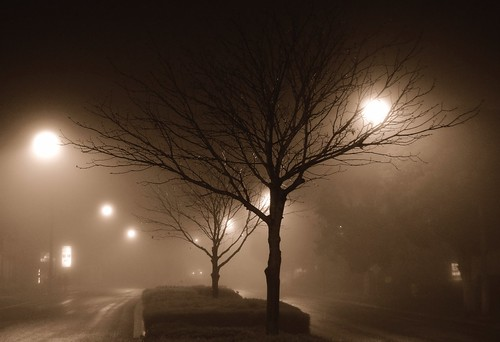 Blanketed by fog