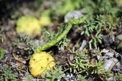 Plantes des terrains secs