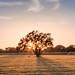 Field Oak by Chris Fullmer