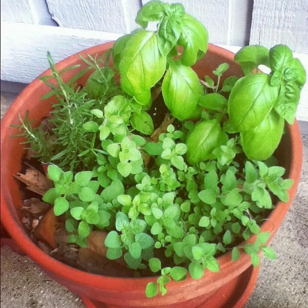 Herbs!