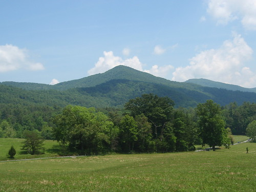 cade's cove meadows (5)