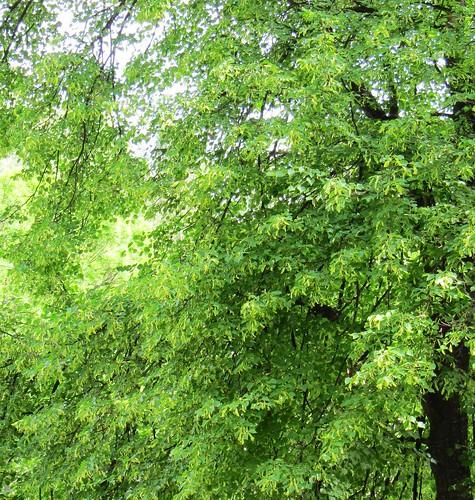 Poruban puut by Anna Amnell