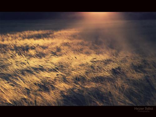 hungary este naplemente természet tavasz táj fény tájkép mező canon600d mygearandme ringexcellence