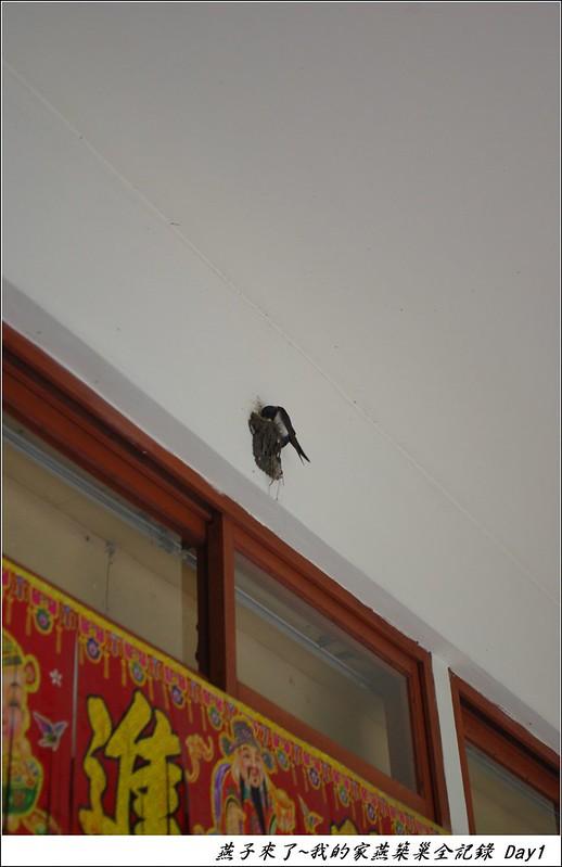 家燕築巢紀錄