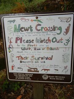 newt crossing