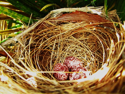 ~unknown nest~unknown eggs~unknown mother~