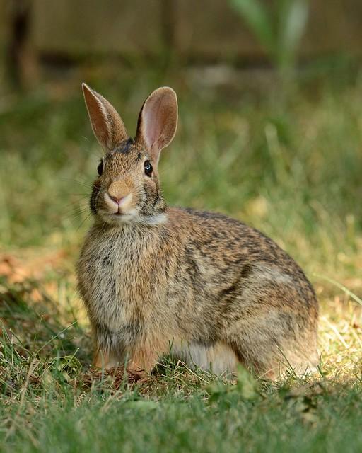 2012 06 26 rabbit flickr photo sharing