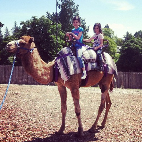 Hey @sitsgirls, we're outside riding camels today! #SITSSummer!