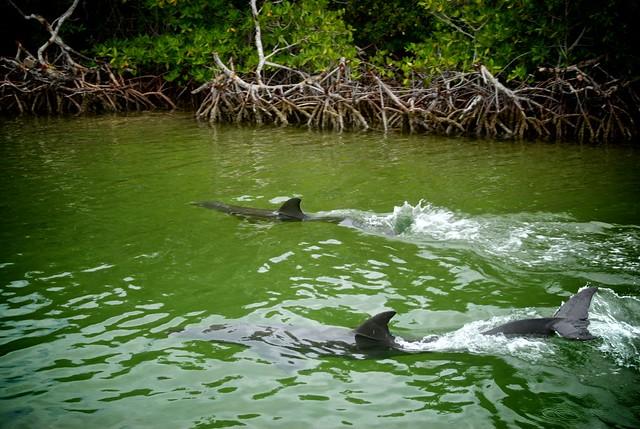 anteketborka.blogspot.com, dauphins15