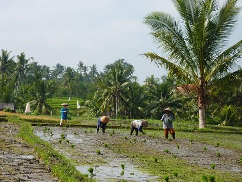 Bali-Route Legian-Jatiluwih (15)