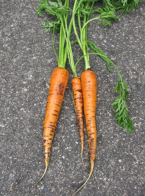 Wow!  We have carrots!!!