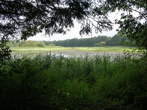 lake pond reserve naturereserve teich steiermark styria schutzgebiet neudau fuchsschweifteich