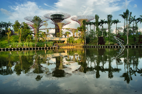 View of the Super Trees and the OCBC skywalk  in the Golden Garden across Dragonfly Lake
