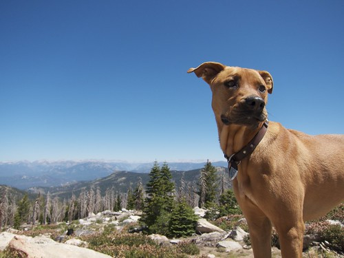 Huckles on Sherman Peak by slampoud