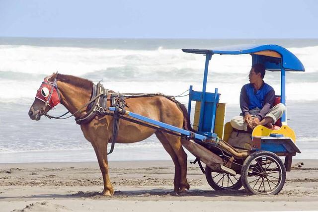 beach_horse25429