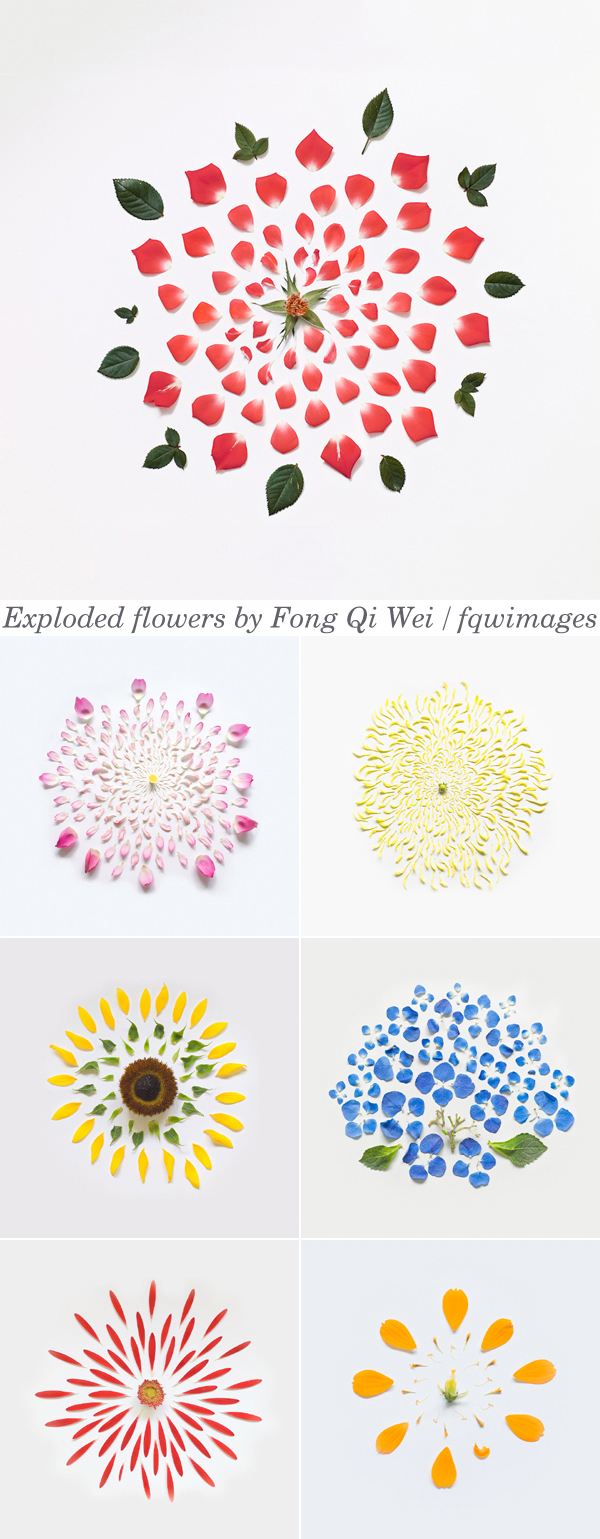 Exploded Flowers by Fong Qi Wei / fqwimages | Emma Lamb