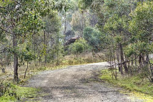 Woodlands walk 2012-07-13 (_MG_0870)