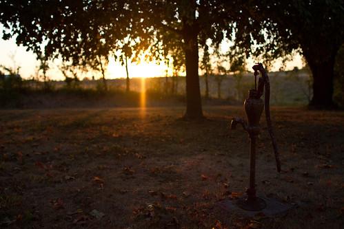 sunset nature water field animal yard canon outdoors cow pretty natural farm sharp ii missouri 7d spigot kirksville 24l taylorbennett 63501